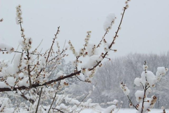 冬の農業リゾバ