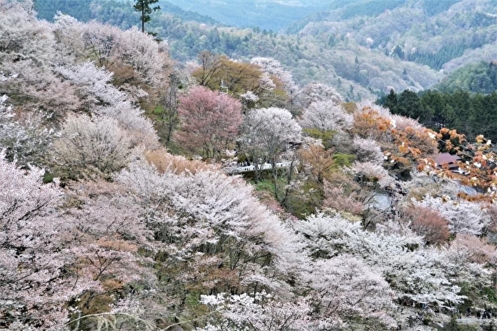 吉野山のリゾートバイト